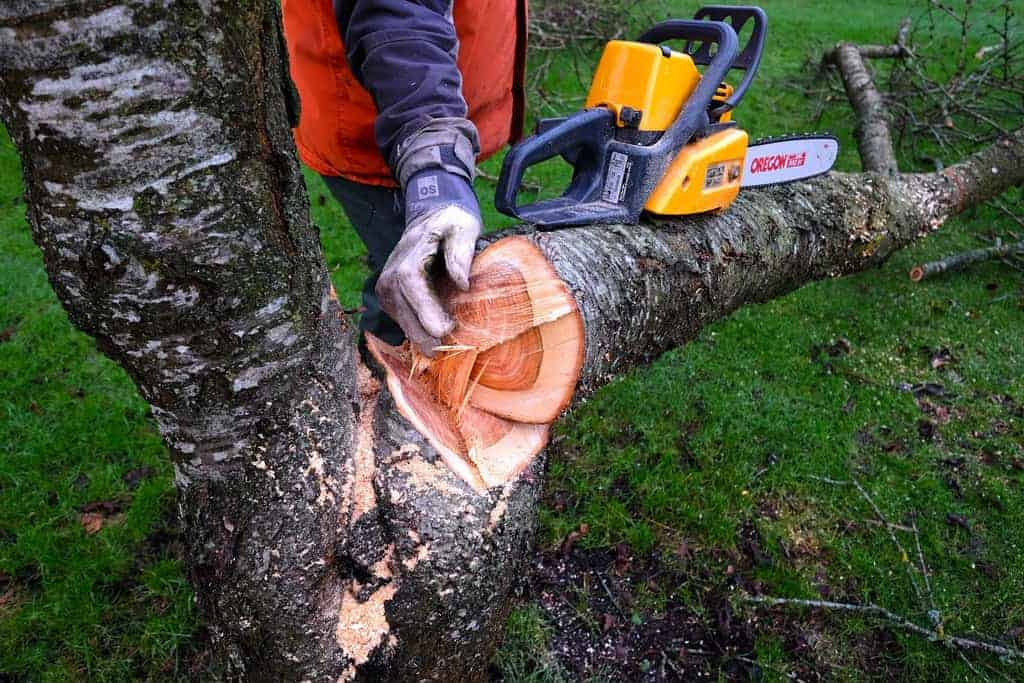 chainsaw trim tree
