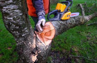 How to Trim a Tree with a Chainsaw